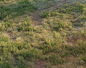 Forest grass 3D asset