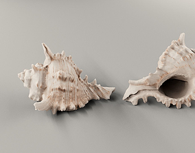 HQ Seashell 01 Scan Model
