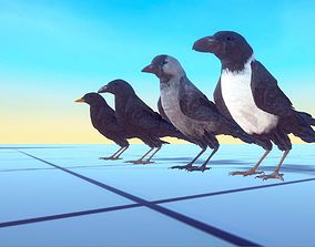 Ravens and Crows 3D asset animated