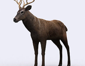 3DRT - Deer animated realtime