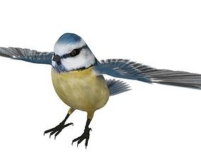 3D model Blue titmouse bird