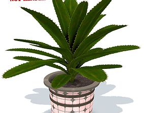 plant in pot - PBR Game-Ready 3D model