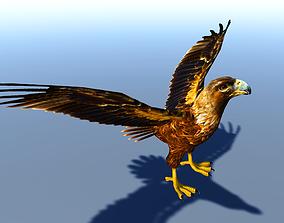 3D asset Eagle Bird