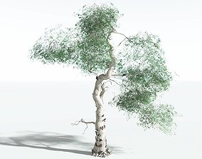 EVERYPlant River Red Gum SINGLE --1 Model-- realtime