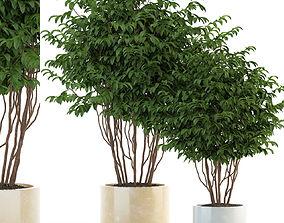 Plants collection 91 3D