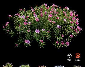 3D Plant Flower set 17