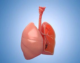 Medicine human lungs organs anatomy respiratory 3D model