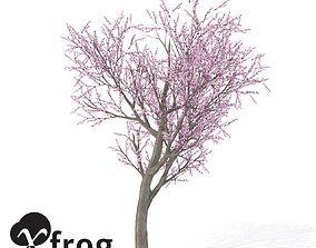 XfrogPlants Peach Tree 1 3D model