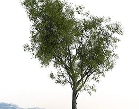 nature Willow 3D