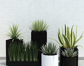 plant 14 aloes 3D model