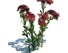 Red Flower Producing Plant 3D