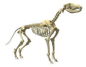 3D model Realistic Dog Skeleton