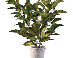 3D Croton in rustic pot