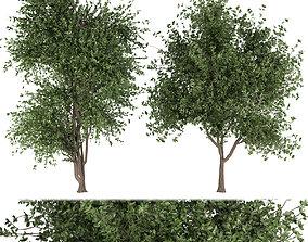 Collection plant vol 131 3D model