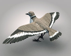Sandpiper Ruddy Turnstone Bird 3D model