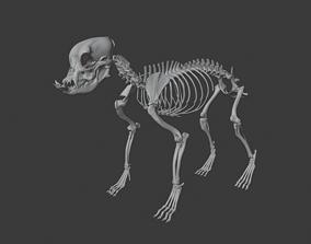 animal-skeleton English Bulldog skeleton 3D printable model