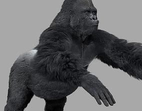 Gorilla-maya 3D