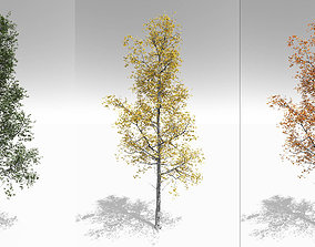 Seasonal Adult Quaking Aspen - Variation 1 3D model