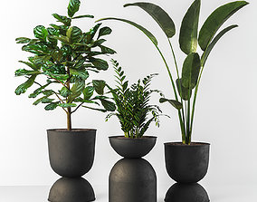 Indoor plant decor 3D