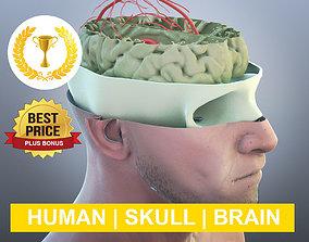 brain Anatomy 3D model PLUS BONUS