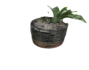 3D Plant in Pot With Dirt
