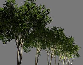 realtime Deciduous tree 3D model