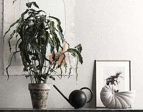 Plant with Watering Can and Shell Pot 3D model