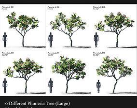 Plumeria Collection 2 3D