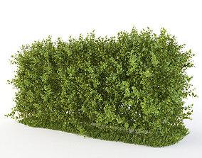 3D model shrub Hedge of bushes