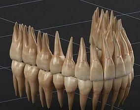 3D Dentition 02