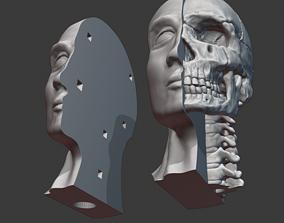 Skull and cervical spine model