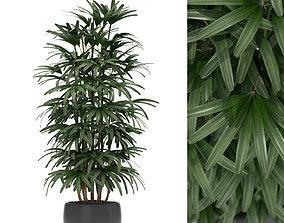 Plants collection 172 3D
