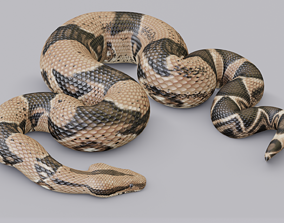 3D asset Animated Boa Constrictor