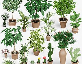 AD PLANTS 3D asset low-poly