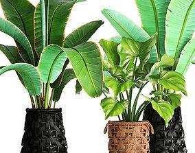Collection plants 42 3D