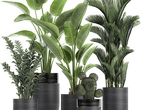 3D Houseplants in a pot for the interior 724