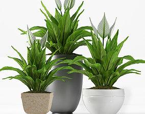 3D model PLANT PEACE LILY