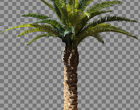 3D asset Palm tree photoscaned