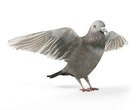 Grey Bird Pigeon 3D model