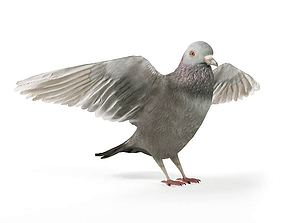 Grey Bird Pigeon 3D model