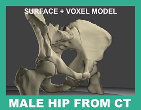 3D model HUMAN HIP BONES FROM CT-SCAN