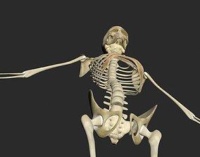 3D model Female Skeleton