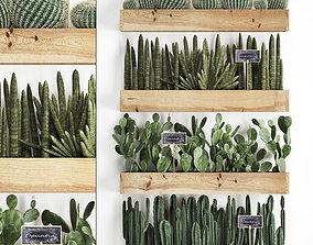 Cactus set wall decor vertical garden 42 3D model