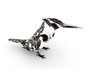 3D model Pied Kingfisher Ceryle rudis