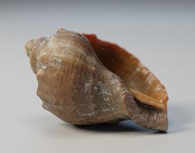 Shell 3D model VR / AR ready