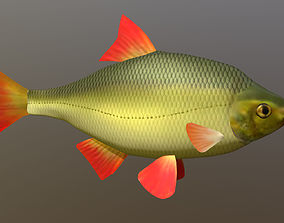 The common rudd 3D model realtime