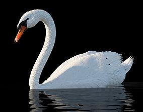 White swan cygnus 3D model