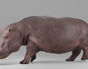 3D model Hippopotamus Rigged and Animated