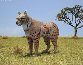 Bobcat Lynx Rufus 3D asset