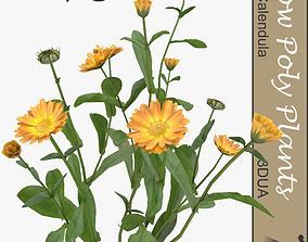 3D asset Calendula universal plant